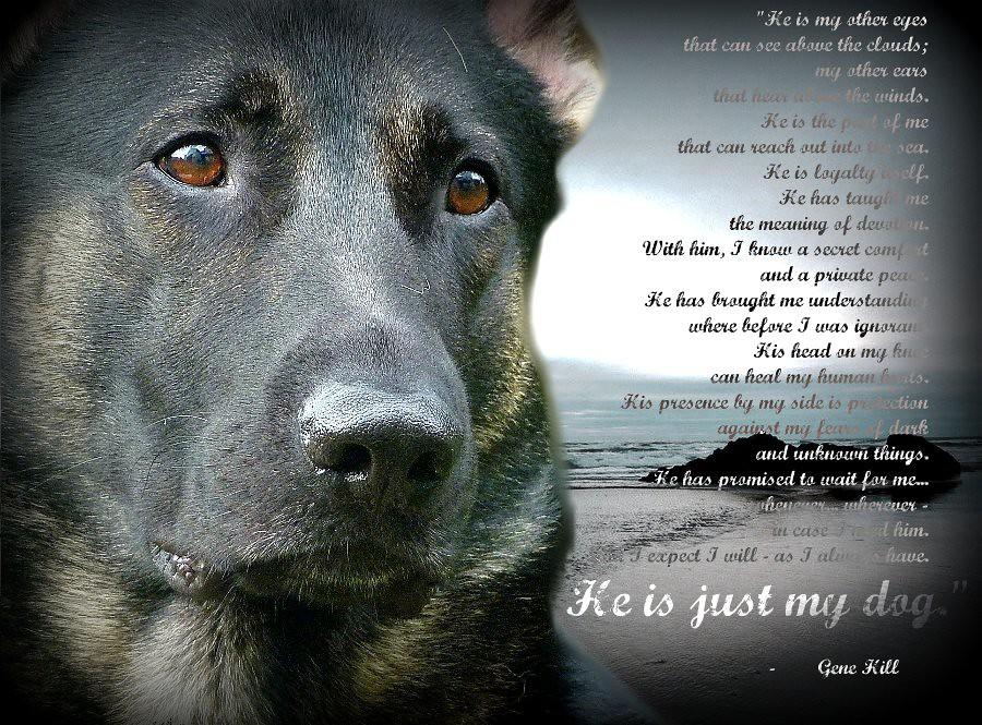 kipling dog poem