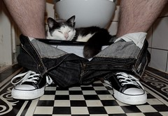 Home, sweet home... (CitroenAZU) Tags: man cat bathroom star chat all underwear toilet jeans tiles converse taylor restroom chuck katze poes checker underpants homme onderbroek plee boutcentrale