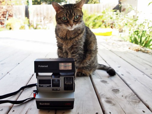 a Polaroid & a kittycat