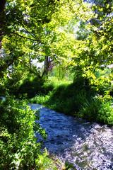 Nature (Theophilos) Tags: trees nature water river drama kefalari δέντρα φύση νερό ποτάμι δράμα κεφαλάρι