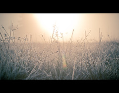 Knole Park - Flare! (iesphotography) Tags: uk nature grass wildlife earlymorning dew flare cinematic naturephotography goldenlight coldmorning travelphotography landscapephotography beautifullandscape winterphotography sunrisephotography ukpark ukphotography goldenhourphotography