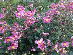 庭の花 by haruhiko_iyota