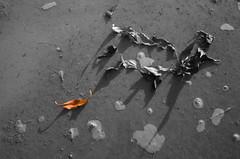 Escape to life (SAUD ALRSHIAD) Tags: life camera brown nature photography nikon flickr escape arabic saudi arabia riyadh ksa leavs saud colorkey saudia   kingdoom flickraward  nikonflickraward alrshiad msawr  escapetolife