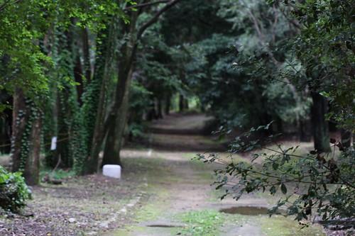 おいしかった空気 / In a quiet forest