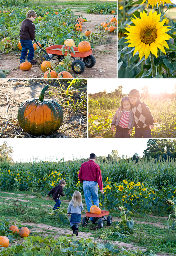 Storyboard 1 Flickr Best child family photographer in charlotte huntersville Concord Kannapolis pumpkin patch photography