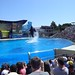 Sea World with SYR - 042