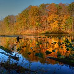Autumn at the Lake (nebulous 1) Tags: autumn lake reflection art fall nature landscape photography nikon artistic explore 60 2011 oct26 northeasternohio platinumheartaward nebulous1 autumnatthelake