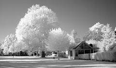 Village Green & Rose Garden Park; Long Island, New York - Infrared Photograph Taken With a Sony F717 Camera (hogophotoNY) Tags: ny newyork digital ir photography with unique taken clear infrared f717 eastcoast greatneck infraredphotography cultcamera longislandnewyork hogo hogophoto infraredphotograph sonyir sonyf717camera villagegreenrosegardenparklongisland newyorkinfraredphotographtakenwithasonyf717camera villagegreenrosegardenpark