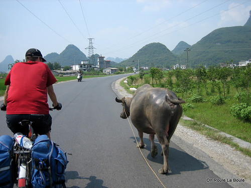 Louis & The Water Buffalo