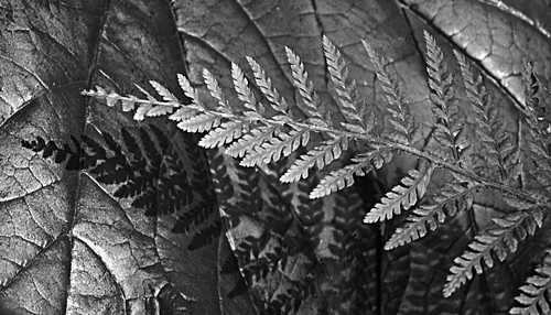 52 Fern & Shadow Knowle Gardens
