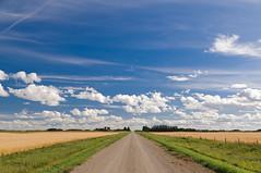Flatland (TigerPal) Tags: nikon flat wheat perspective harvest strasbourg sk prairie saskatchewan plains sask gettyimages flatland converging southey d300s