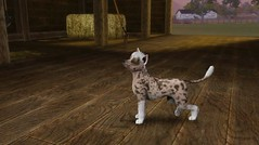 Chinese Crested by MamiiGood