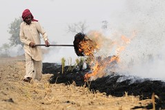 NP India burning 24 (CIAT International Center for Tropical Agriculture) Tags: india rice wheat punjab climatechange globalwarming ciat cgiar foodsecurity ccafs