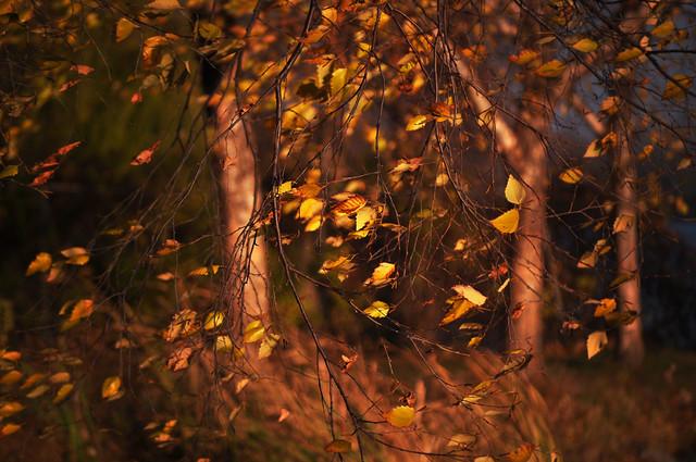 Goodbye, Autumn's Golden Glory