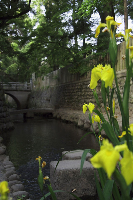 110521_051839_大垣朝散歩_大垣八幡神社