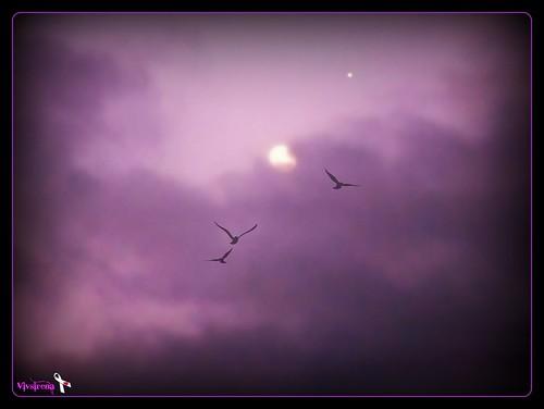 Birds in Purple Heavens* by vivsirena ( *On & Off* )