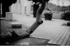 (leaping_time) Tags: tree tmax bessa dev 400 f11 nokton 430 fomapan r3m