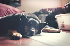 Oh, the life of a dog... (Josh Tant Photography) Tags: friends red dog blur color cute dogs 35mm canon happy lights cool friend pretty bright sweet bokeh brother awesome dude 5d bro popular sick bestfriends brah 35l beautilful 5dmk2