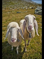 """Draw me a sheep"" Image was taken  in  Switzerland ;  Saas Almagell above Stausee Matmark , Augost 10,2011.    12:25:28   .     no.83. (Izakigur) Tags: summer italy mountains alps liberty schweiz switzerland nikon europa europe flickr italia suisse suiza swiss feel monterosa monte d200 helvetia nikkor svizzera wallis ronaldo lepetitprince ch valais dieschweiz musictomyeyes  sussa saasfee suizo  myswitzerland lasuisse nikond200 nikkor1755f28 montemoro mattmark    montemoropass thebestofday gnneniyisi izakigur cantonduvalais  suisia imagesforthelittleprince laventuresuisse mygearandme izakiguralps izakigur2011"