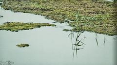 Reflection on the swamp HDR (Instagram x3abr twitter x3abrr) Tags: desert sa بحيرة ماء السعودية صحراء وادي نهر طعوس مستنقع نفود الربيعية usingacanoneos50d 2011inalqasim انعكاسعلىالمستنقعالعفجةالقصيمالمملكةالعربيةالسعوديوthisphotowastakenonoctober28 swampwaterandrivervalley