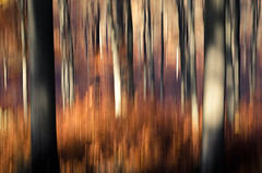 (koeb) Tags: trees abstract vertical forrest pan panning wald bume knigsstuhl kinzenbach