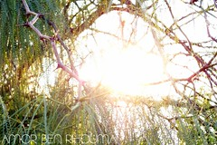 sunset (http://www.facebook.com/amor.amor.77582) Tags: sunset tunisia tunis