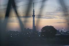 (quashlo) Tags: sunset silhouette tokyo jr  naritaexpress  nex   jreast  jr   sumidaward  trussbridge arakawariver  eastjapanrailway jr  tokyoskytree edogawaward sobumainline