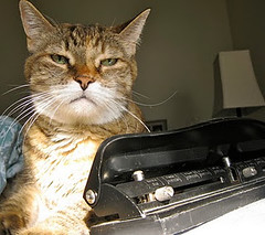 Reviewing 3-hole punches. (Cat Reports) Tags: cats funnycatpics techproducts catreports