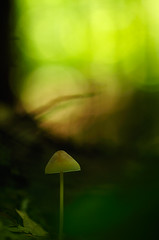 The little folk in the forest III (flowerpics09) Tags: autumn light oktober mushroom colors licht day bokeh dream silence makro pilz mecklenburg
