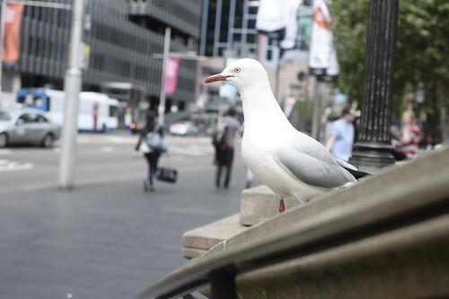 Town Hall Birds