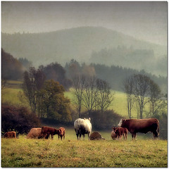 Autumn - my favourite season (pixel_unikat) Tags: morning autumn landscape austria cow pasture textured upperaustria mhlviertel thankstoskeletalmessfortextures