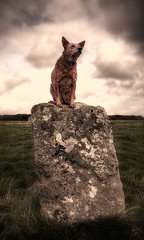 Statuesque (murphyz) Tags: dog field statue clouds standing pose circle countryside cornwall stones dramatic posing drama statuesque