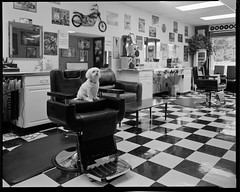 One-A-Day, 9/13/11 New-Retro Barbershop (mat4226) Tags: new longexposure ohio bw dog film oneaday puppy diy fuji floor angle cleveland w small wide n oldschool ne retro 8x10 barbershop barber oh hp5 f56 northeast checkered ilford fujinon largeformat zonesystem filmphotography eastmankodak sheetfilm 11100 pyrocathd homeprocessed eastmancommercialb compensatingdeveloper dilutedeveloper believeinfilm