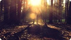 it happened on a monday (FlavioSarescia) Tags: light love me sunshine forest switzerland shine flare monday