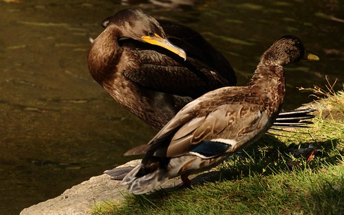 Duck! I said. DUUUUCK!