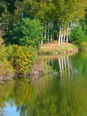 Riflessi sul Po (BORGHY52) Tags: italy nature fiume piemonte po riflessi ottobre carignano fiumepo betulle