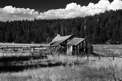 On the Way to Oblivion (artmadrigal) Tags: old rot clouds barn weeds brush oldwood delapidated