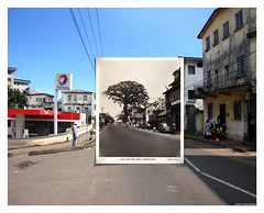 The Cotton Tree from Pademba road