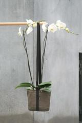BACSAC nl suspendu orchidee (meerdangrijs) Tags: outdoor bloempot plantenbak bacsac plantenzakken