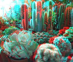 Cactus - 3D anaglifo anaglyph (vtemz) Tags: cactus stereoscopic 3d anaglyph stereo w1 spm anaglifo redcyan estereo 3dphoto stereophotomaker estereoscópica foto3d vtemz fotografía3d finepix3d finepixw1