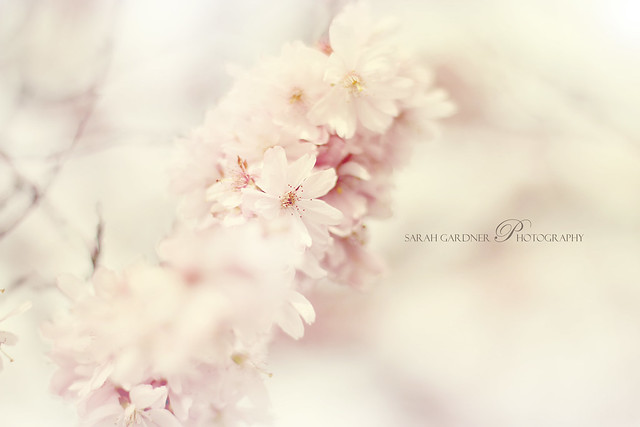 Floral_blog_015