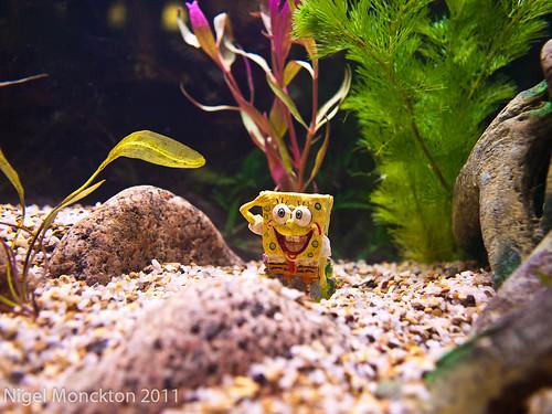 29 Oct 2011: Spongebob by nmonckton