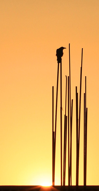 Sunrise bird on reinforcing rods