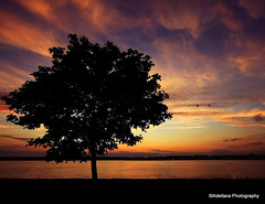 ~There'll be no sadness, be no sorrow because my sun, you'll come out tomorrow.~ (Adettara Photography) Tags: sunset color tree birds silhouette river landscape us dc washington potomac adettara saariysqualitypictures artistoftheyearlevel2