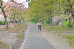 Bike Path in Osaka