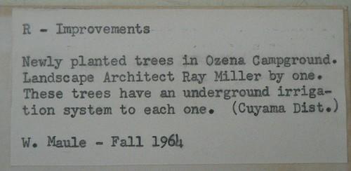 Ozena 1964 Back