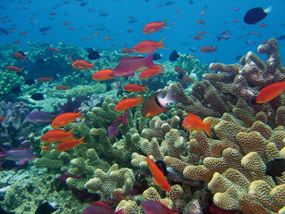 Rainbow Reef, Fiji. Photo by David Burdick, 2006