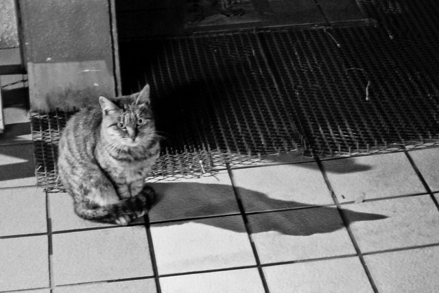 Today's Cat@2011-11-11