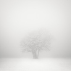 Still (c e d e r) Tags: trees sky bw white mist black tree art fog square photography sweden fine monochromatic infrared sverige nm malm malmo hoya ceder r72 720 720nm