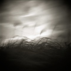 Withered Silver Grass (Eye) Tags: longexposure holga hokkaido fujifilm 30seconds acros100 nd400 nd8 fixedshadows